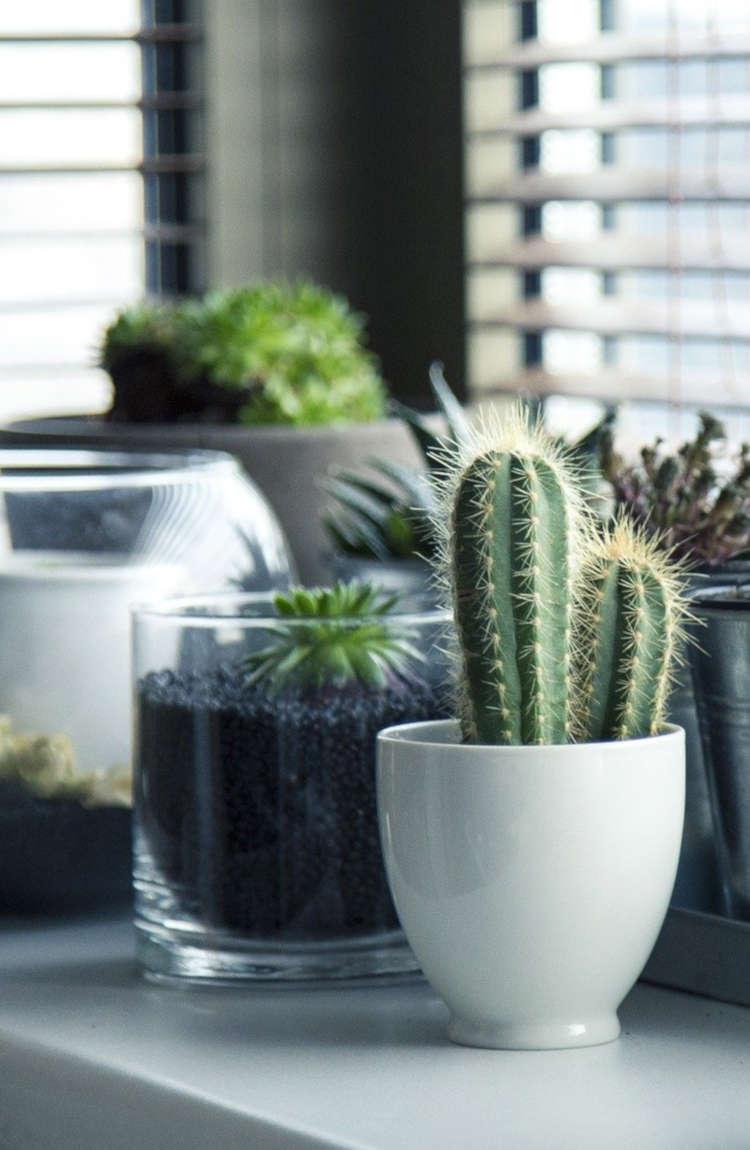 Φυτά κηποτεχνίας